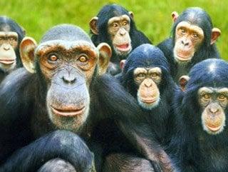 Maymunlar virüse karşı korunabilecek