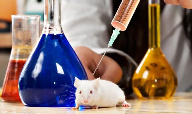 Japon bilim insanlarının fare deneyi başarılı oldu