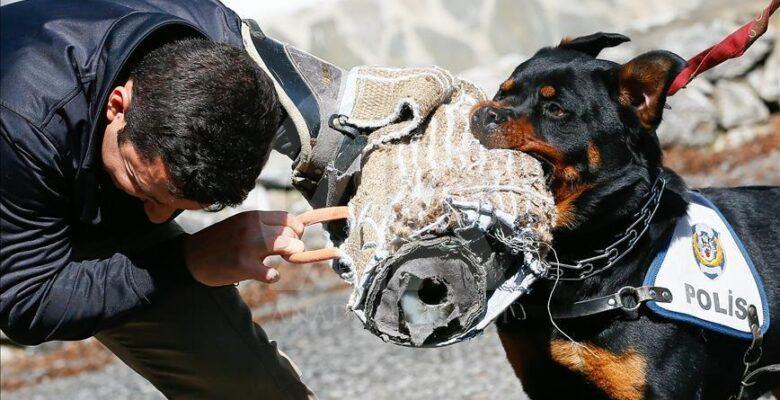 Dedektör köpekler Akyurt'ta yetişecek