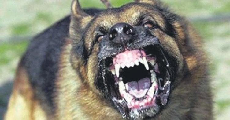 Başıboş sokak köpeği dehşeti
