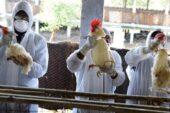 Kuş Gribine Karşı Belediye'den Önlem