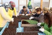 Çankaya'nın Yazlık Çiçek Üretimi Başladı