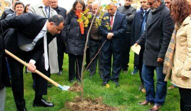 4 yılda 50 bin 500 ağaç