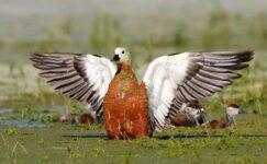 Nallıhan Kuş Cennetinde Foto Safari