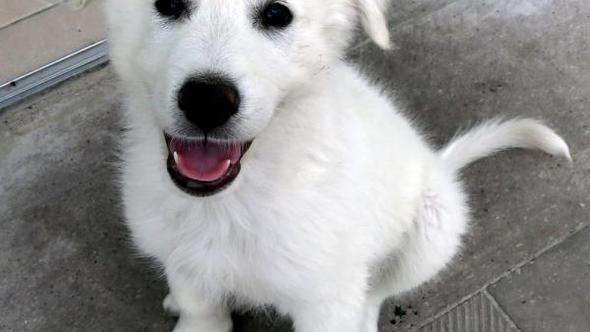 Yenimahalle'de 193 köpek sahiplendirildi