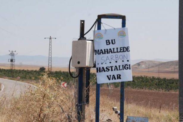 Ankara'da şarbon karantinası