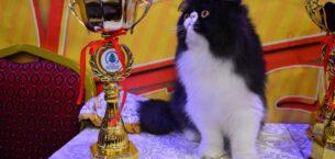 3. Uluslararası Pursaklar Kedi Güzellik Festivali Başlıyor