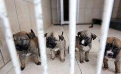 Yenimahalle'de Sokak Hayvanlarına Yaşam Alanı