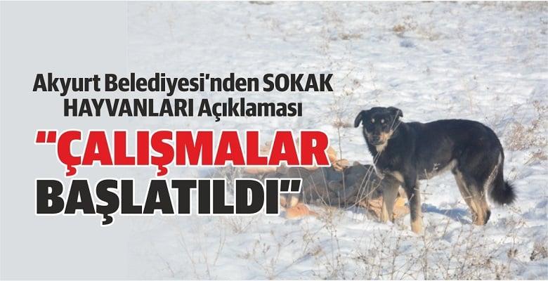 Akyurt Belediyesi'nden Sokak Hayvanları Açıklaması