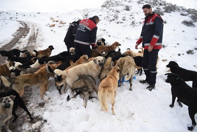 Büyükşehir'den Sokak Hayvanları Çalıştayı