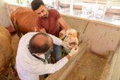 Altındağ'da Kurbanlıklara Sağlık Taraması