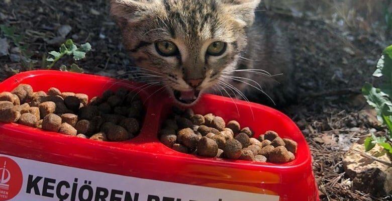 Keçiören'de Sahipsiz Hayvanlara Beslenme Noktaları
