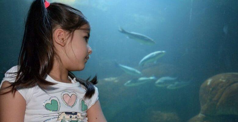 Keçiören'de Okyanusu Keşfetmeye Var mısınız?