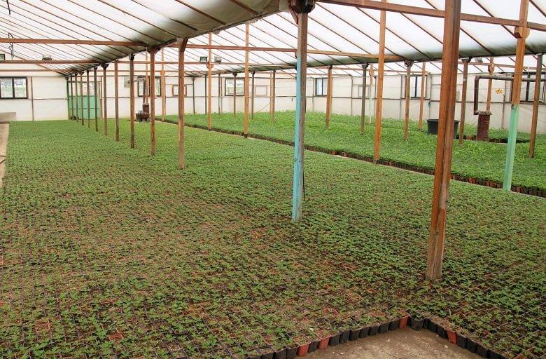 Çankaya'da Kışlık Çiçek İçin Üretim Başladı