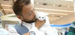 Ankara Kedileri Zirvede Yoğun İlgiyle Karşılaştı
