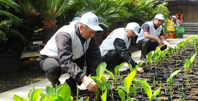 Büyükşehir 2019'un Son Bahçıvanlarını Bekliyor