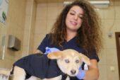 Çankaya'dan Sokak Hayvanlarına Güvenli Tedavi