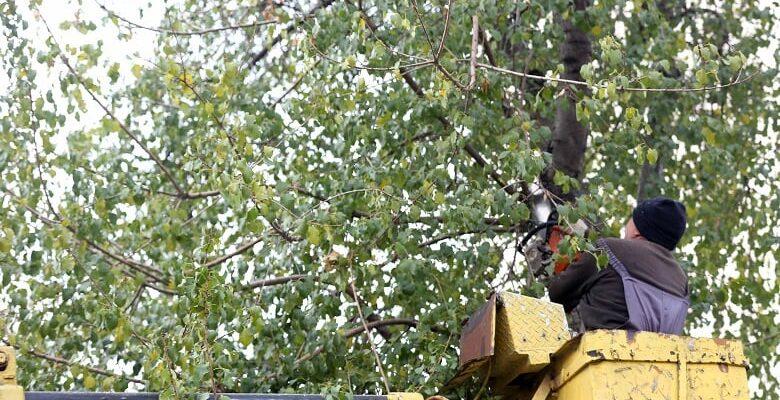 Budanan Ağaçlar Yenimahallelilere Yakacak Oluyor