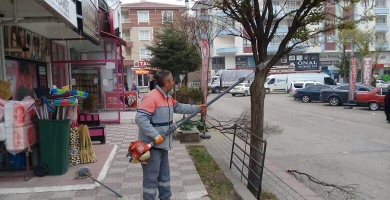 Tehlike Oluşturan Ağaçlar Budandı