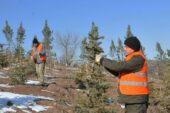 Keçiören'de 120 Minik Öğrenciye 120 Ağaç Sahiplendirildi