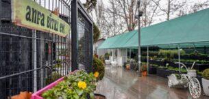 ANFA bitki satış mağazaları açacak