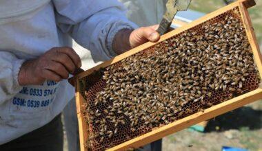 Başkentli çiftçilere arıcılık eğitimi