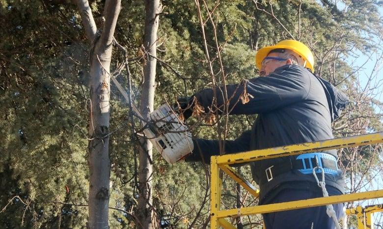 Ağaçlar bahara hazırlanıyor