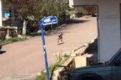 Çubuk'ta İlçe Merkezine İnen Karaca Görüntülendi