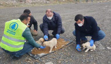 Pursaklar Belediyesi sokak hayvanlarını unutmadı