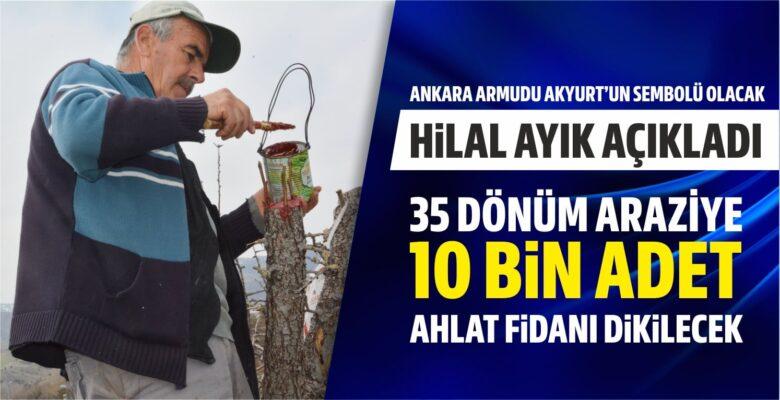 Ankara armudu Akyurt'un sembolü olacak