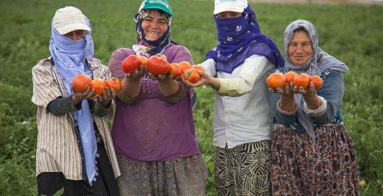 Çiftçiye 5 milyon fide dağıtılacak