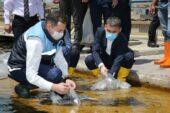 Mogan gölüne 35 bin sazan yavrusu bırakıldı