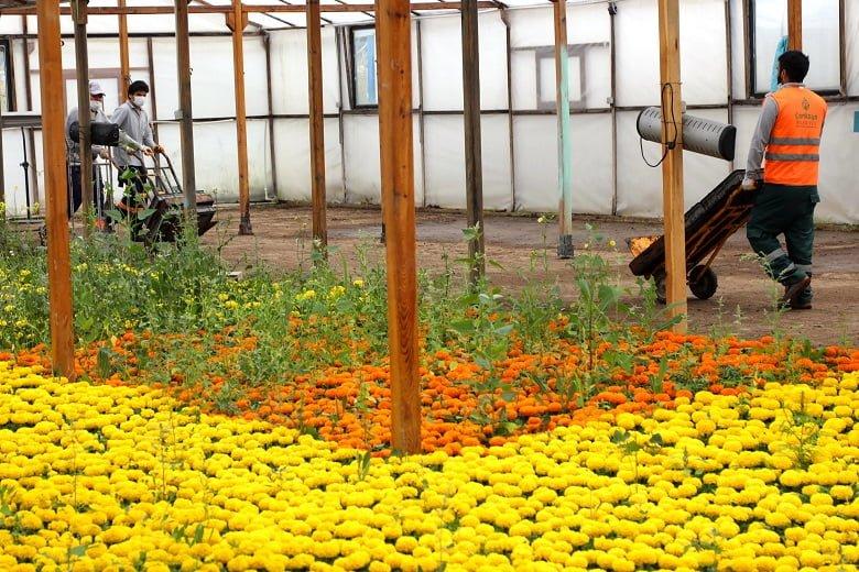 Baharın çiçekleri Çankaya'da açıyor