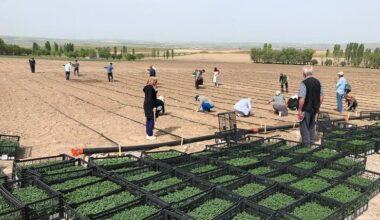 Büyükşehir'e ait tarım arazilerinde üretim başladı