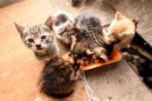 Kale'nin minik yavrularına mama desteği
