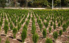 """Orman Genel Müdürü Karacabey, """"Her insan doğaya 210 ağaç borçlu"""""""