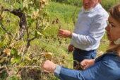 CHP Genel Başkan Yardımcısı Karaca: TARSİM kapsamında olmayan çiftçiye yardım yok