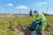 ASKİ'den hobi bahçeleri için su tasarrufu uyarısı