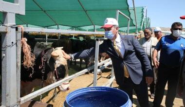 Türkiye'nin en nitelikli hayvancılık bölgesi için adım atıldı