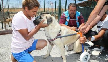 Gölbaşı Belediyesi'den engelli sokak hayvanlarına yaşam desteği