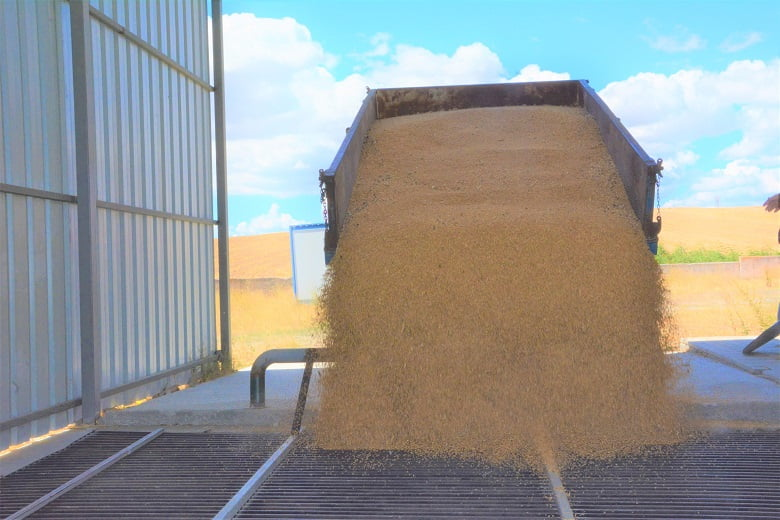 Akyurt Tohum Eleme Tesisi 856 ton hububatı işledi