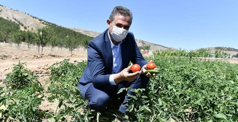 Mamak tarımda hedef büyütüyor