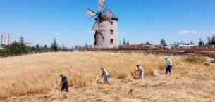 Altınköy'de hasat yapıldı