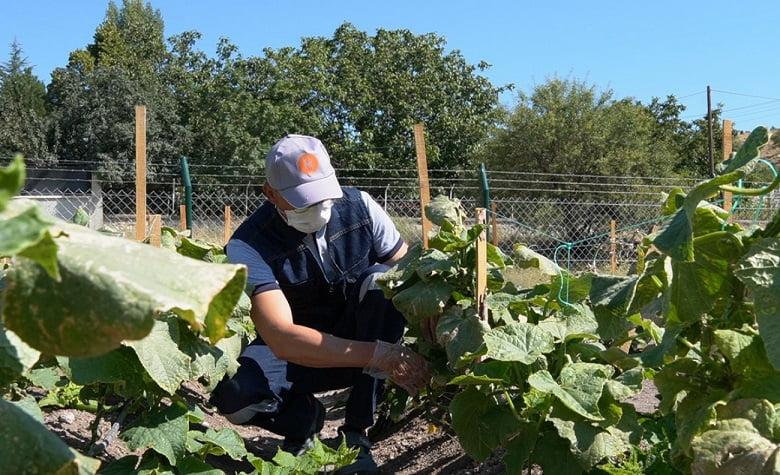 Keçiören Belediyesi örnek tarımsal üretimin mahsullerini topluyor