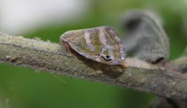 Böceksavar Mantarlar Görev Başında