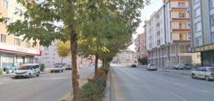 Nurettin Cankurtaran'da ağaçlar kazaya davetiye çıkartıyor