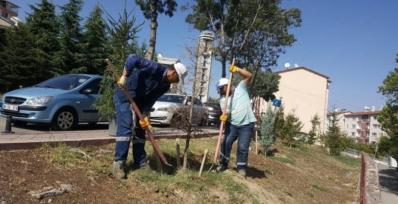 Başkan Altınok: Herkesin bir dikili ağacı olacak