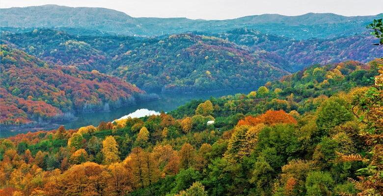 Türkiye ormanları sera gazı salınımının yüzde 16'sını tutuyor