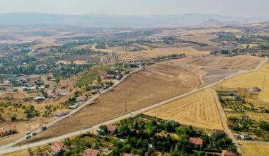 Ankara'ya ıhlamur ormanı
