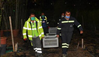 Ankara'dan Hatay'a fidanlar can olacak